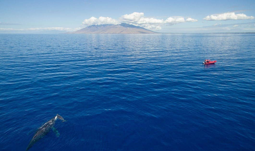 private whale watching maui
