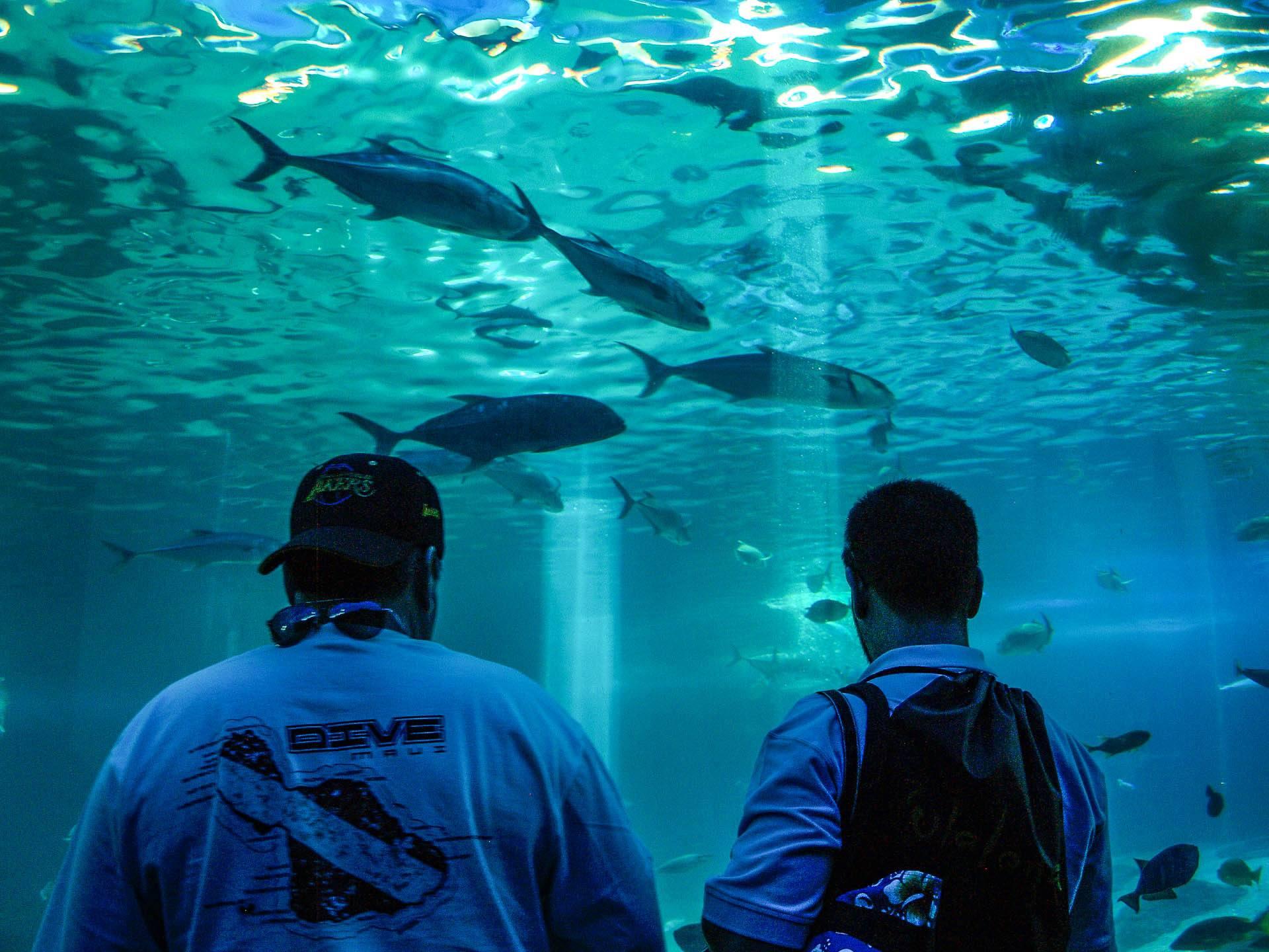 Maui Ocean Center Aquarium Tunnel Visitors