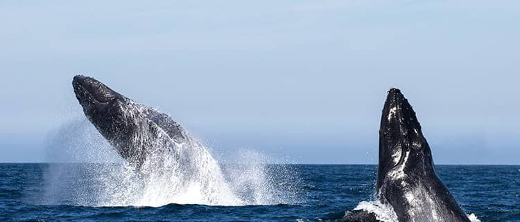 RLR Whalewatching