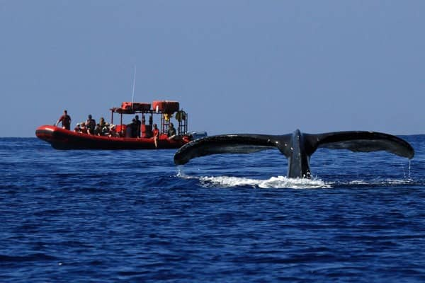 whale watching tour raft and tail