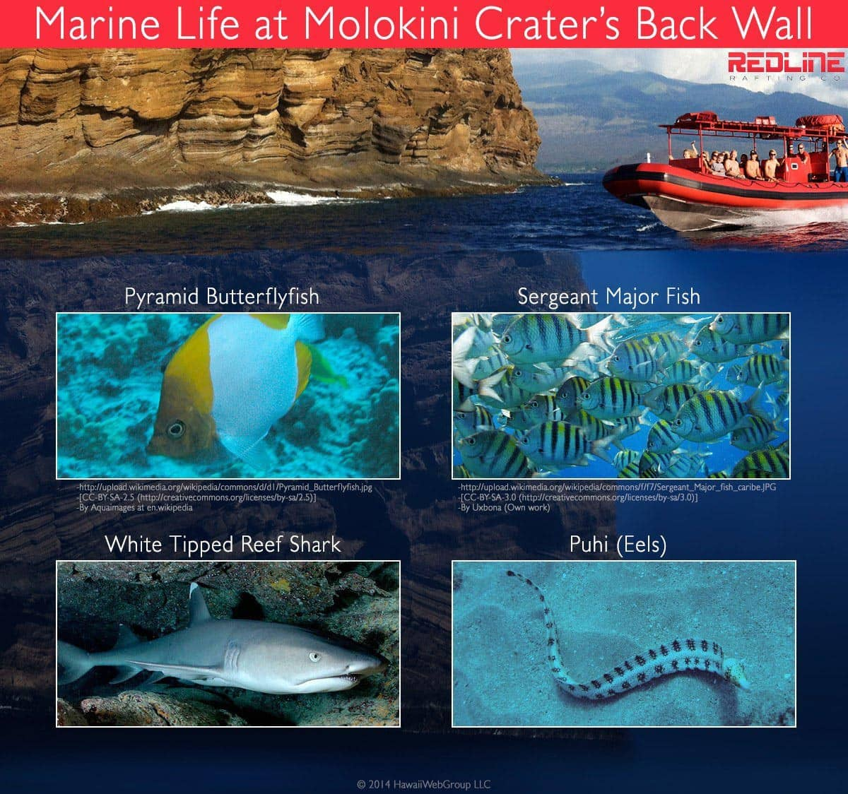 Molokini Crater Back Wall Marine Life