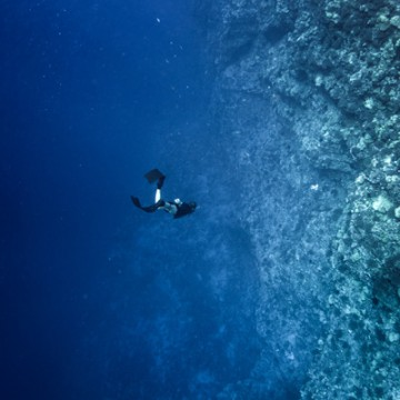Free Dive At Molokini Crater