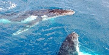 maui whalewatchingmaui