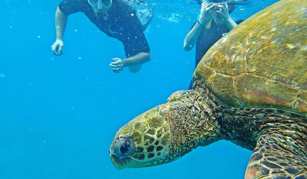 sl turtle right