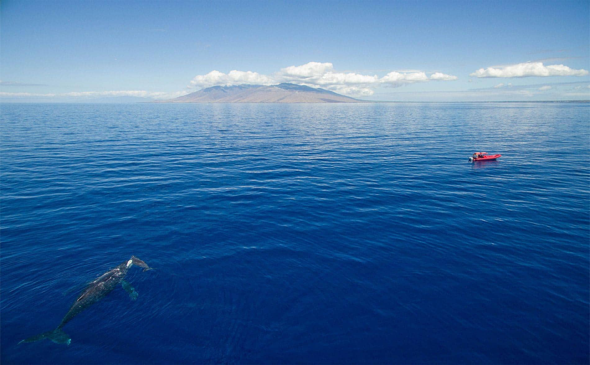 whale watching raft maui