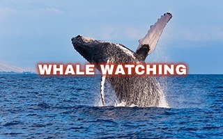 View our Whale Watching Tour Page