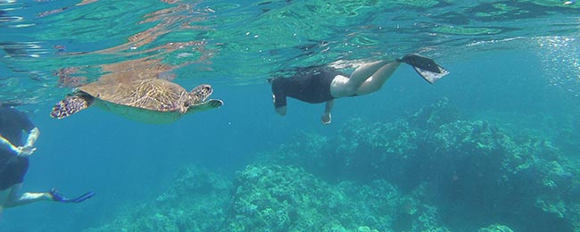 swimming with sea turtle in maui